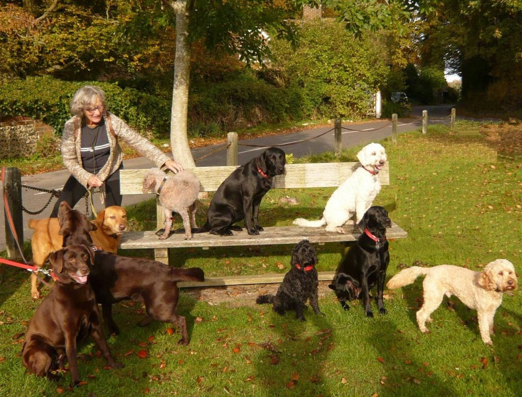 One person with 9 dogs around a bench on the green