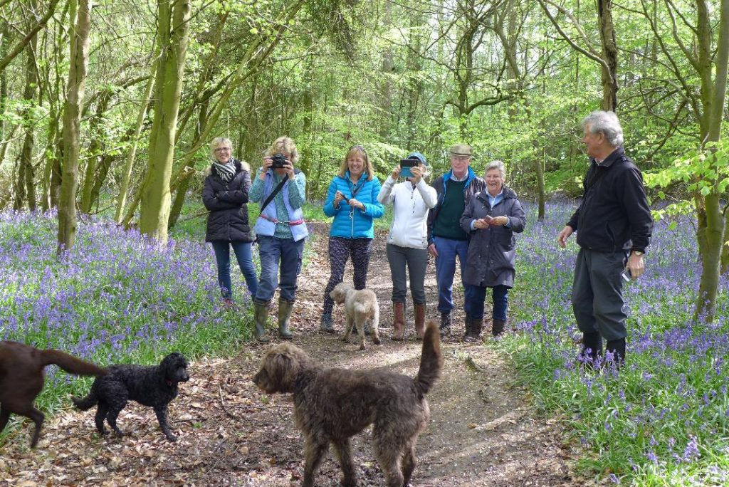 walkers and dogs admiring the bluebells