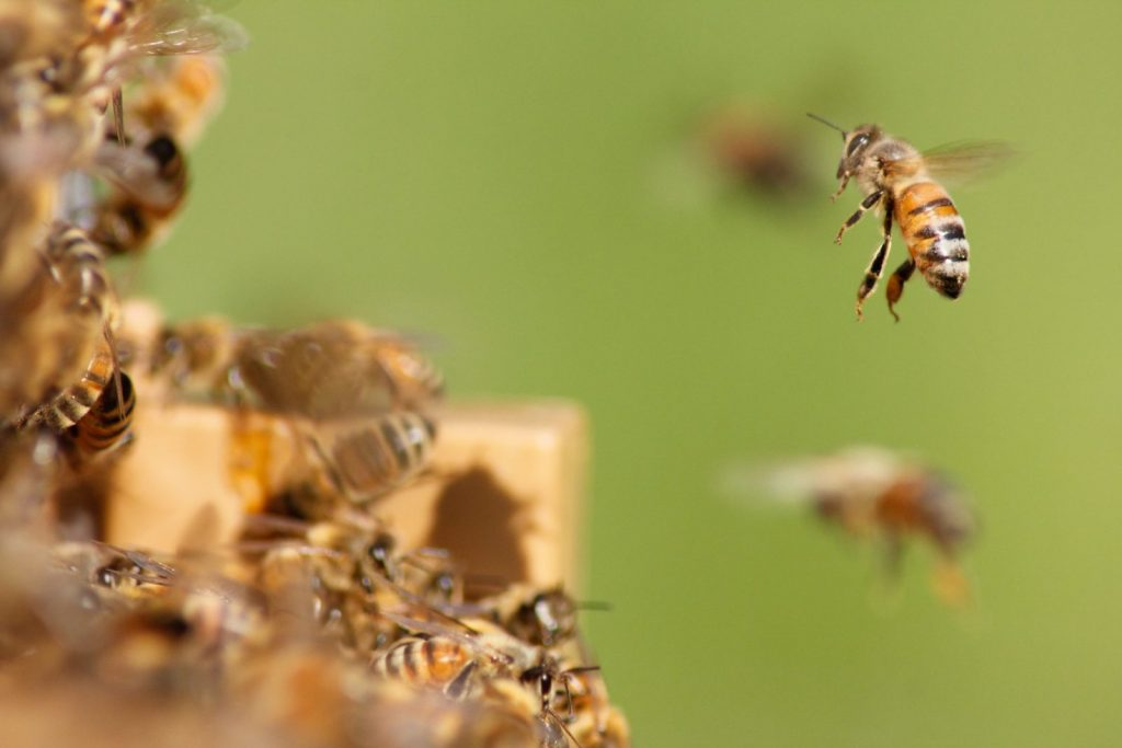 Bees flying